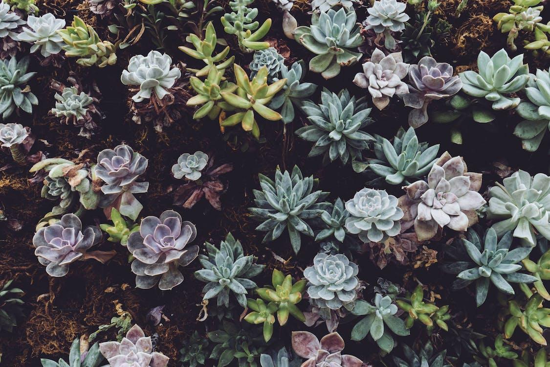 Photo of Succulent Plants