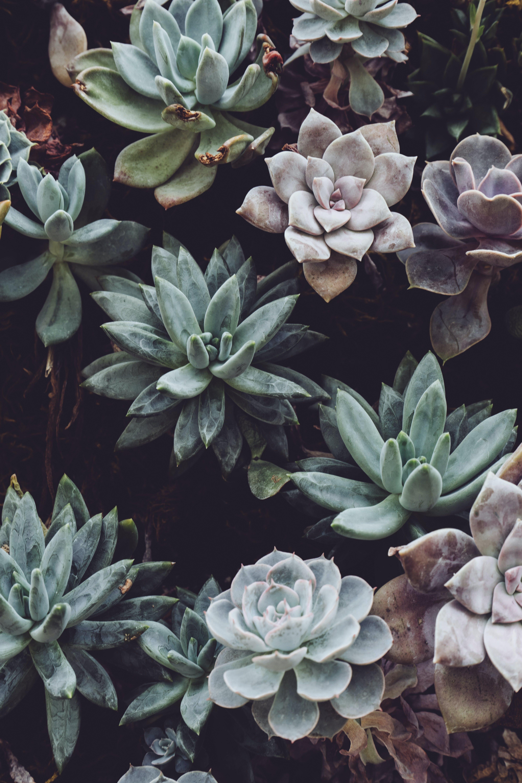 Close-up Photo of Succulent Plants