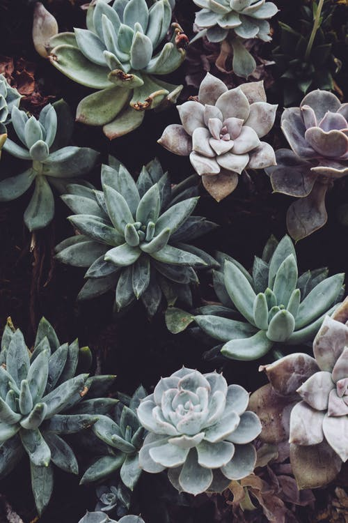 Close-up Photo of Succulent Plants