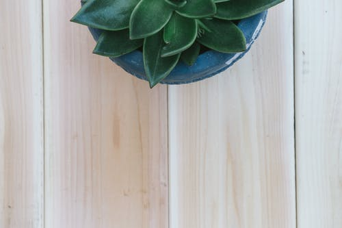 Dark Green Succulent Plant on Wooden Surface
