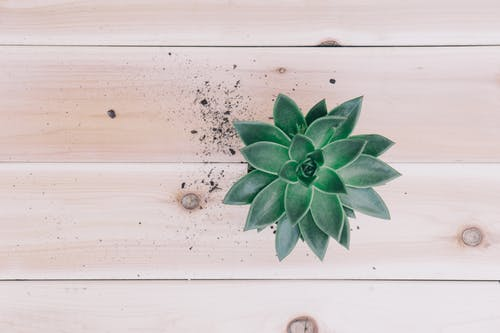 Top View Photo of Green Succulent Plant on Wooden Surface