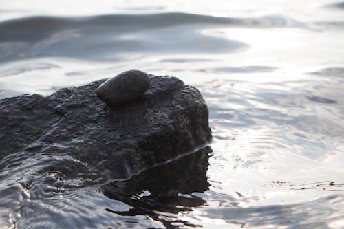 Fotobanka sbezplatnými fotkami na tému čeriť, kameň, kamienok, povrch