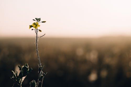 Imagine de stoc gratuită din câmp, floare, floră
