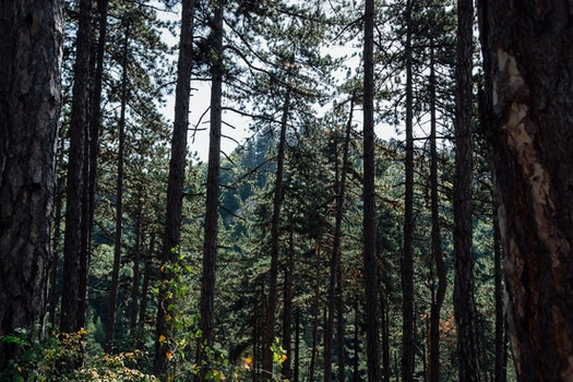 Free stock photo of nature, forest, trees, branches