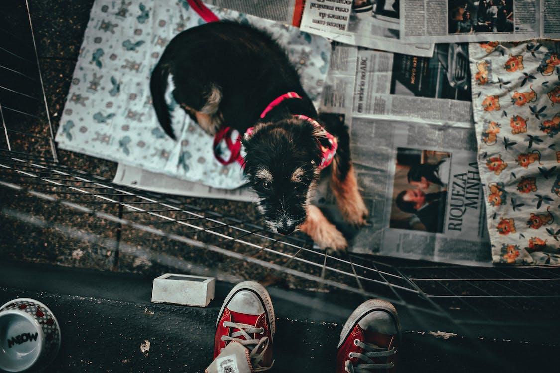 dyr, hund, husdyr