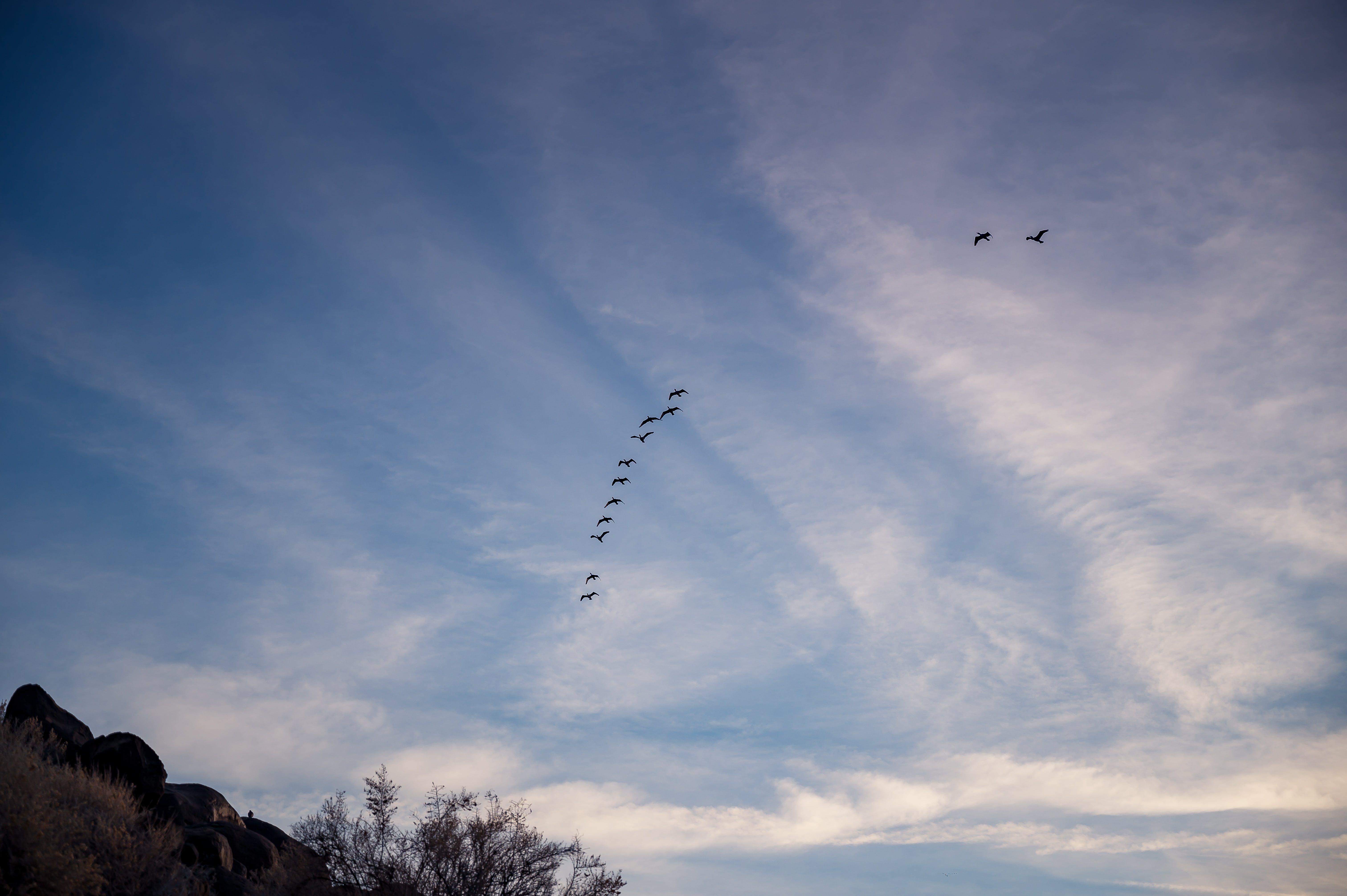 Photo of Flock of Birds Flying