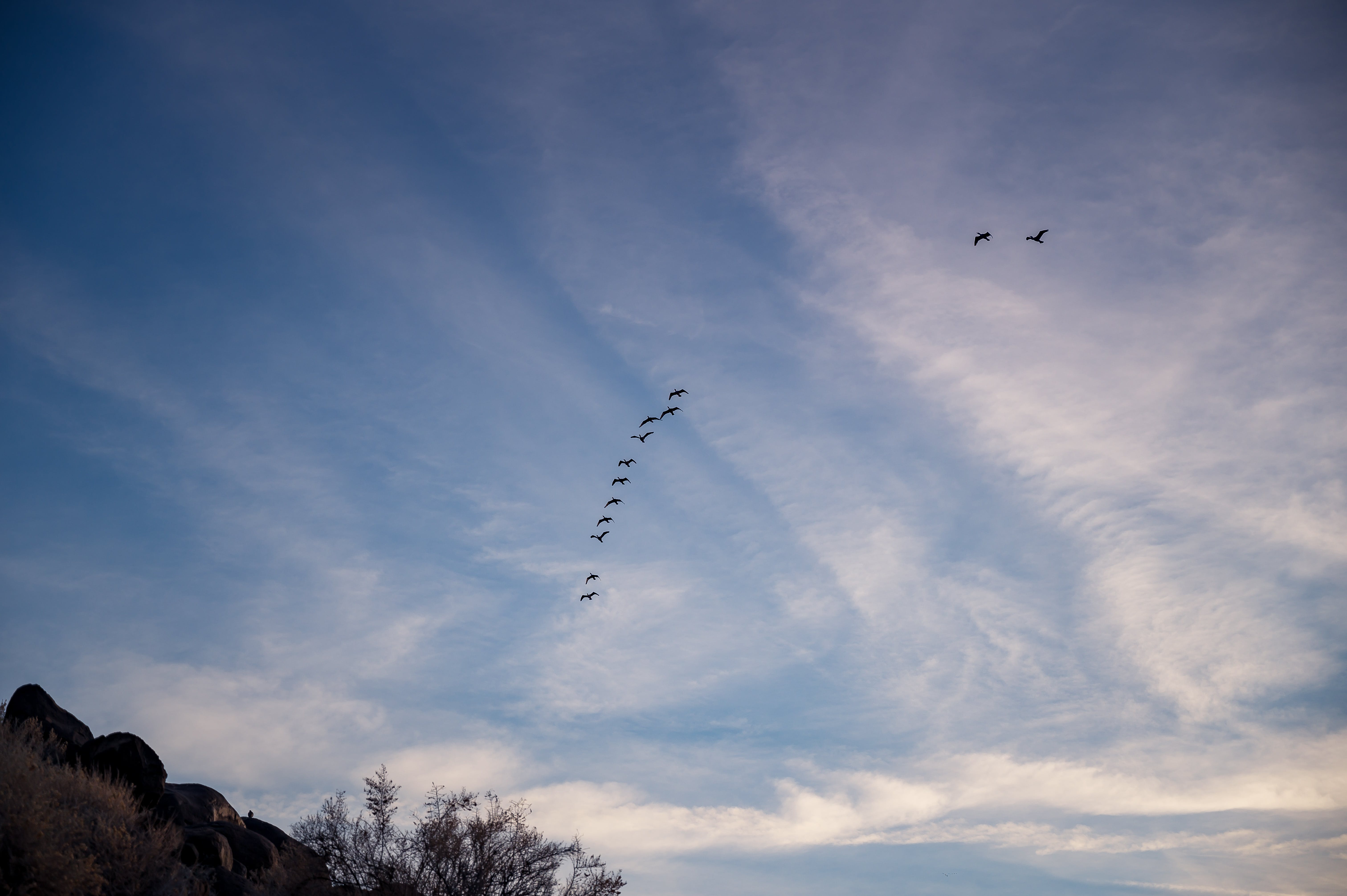Photo of Flock of Birds Flying