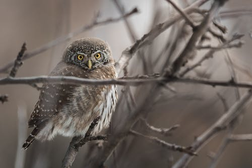 Close-Up Photo of Owl on Tree Branch
