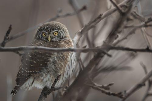 Foto profissional grátis de animais selvagens, coruja, fotografia da vida selvagem, olhos amarelos