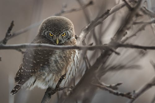 Selective Focus Photography of Owl Perched on Twigs