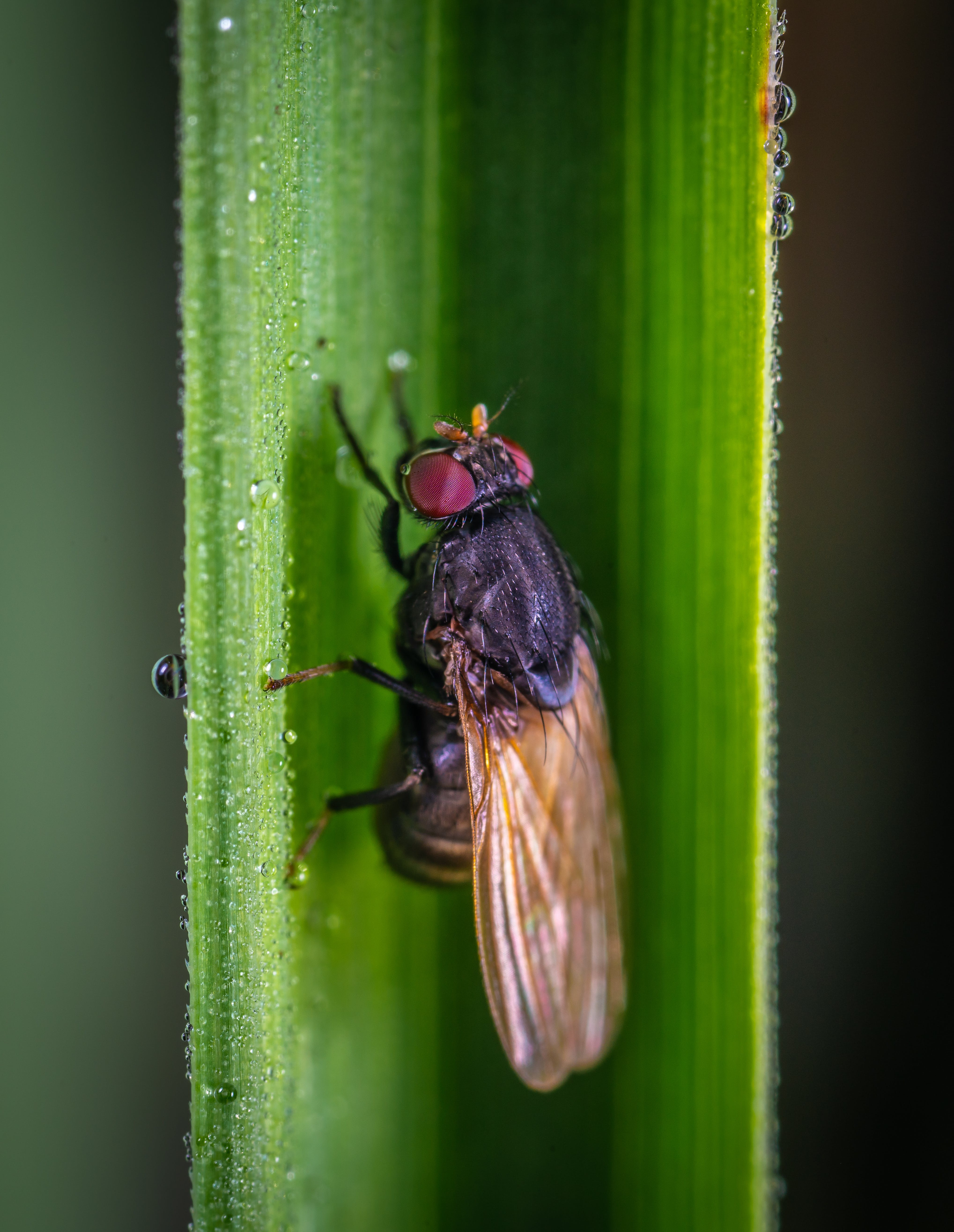 Free stock photo of fly, insect, macro