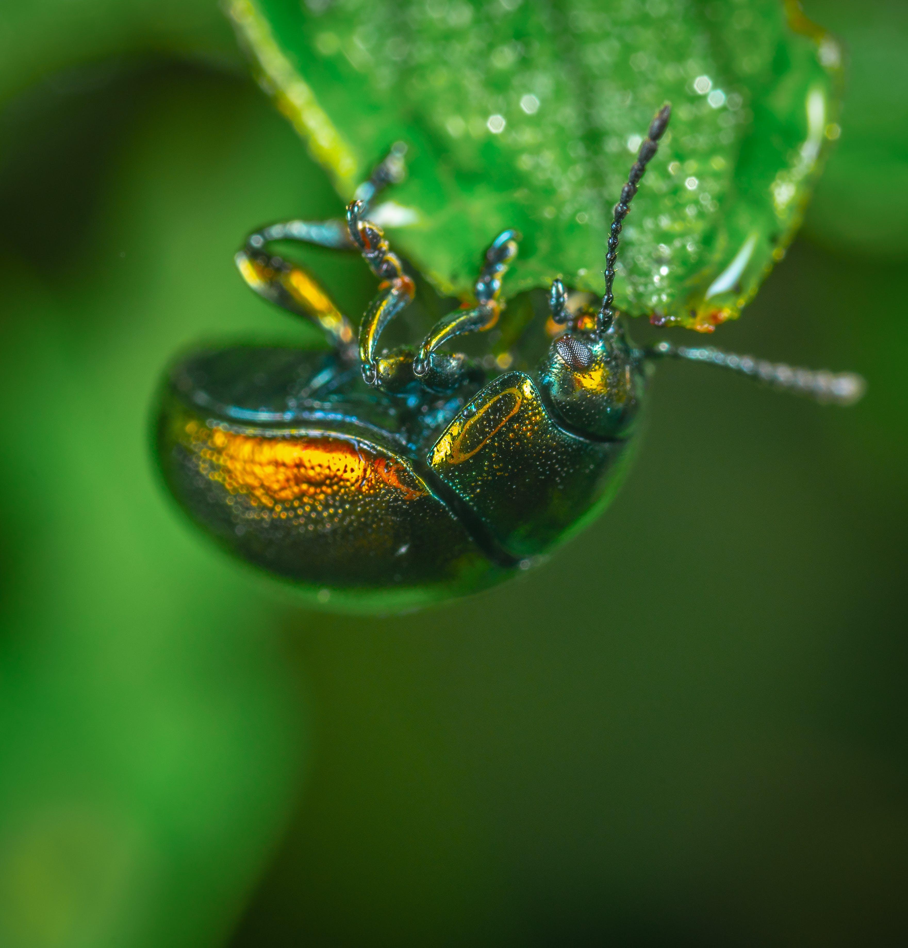 Kostenloses Stock Foto zu bug, insekt, makro