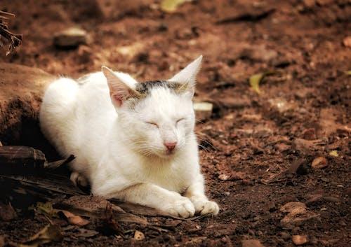Free stock photo of cat, cat photography, cat wallpaper