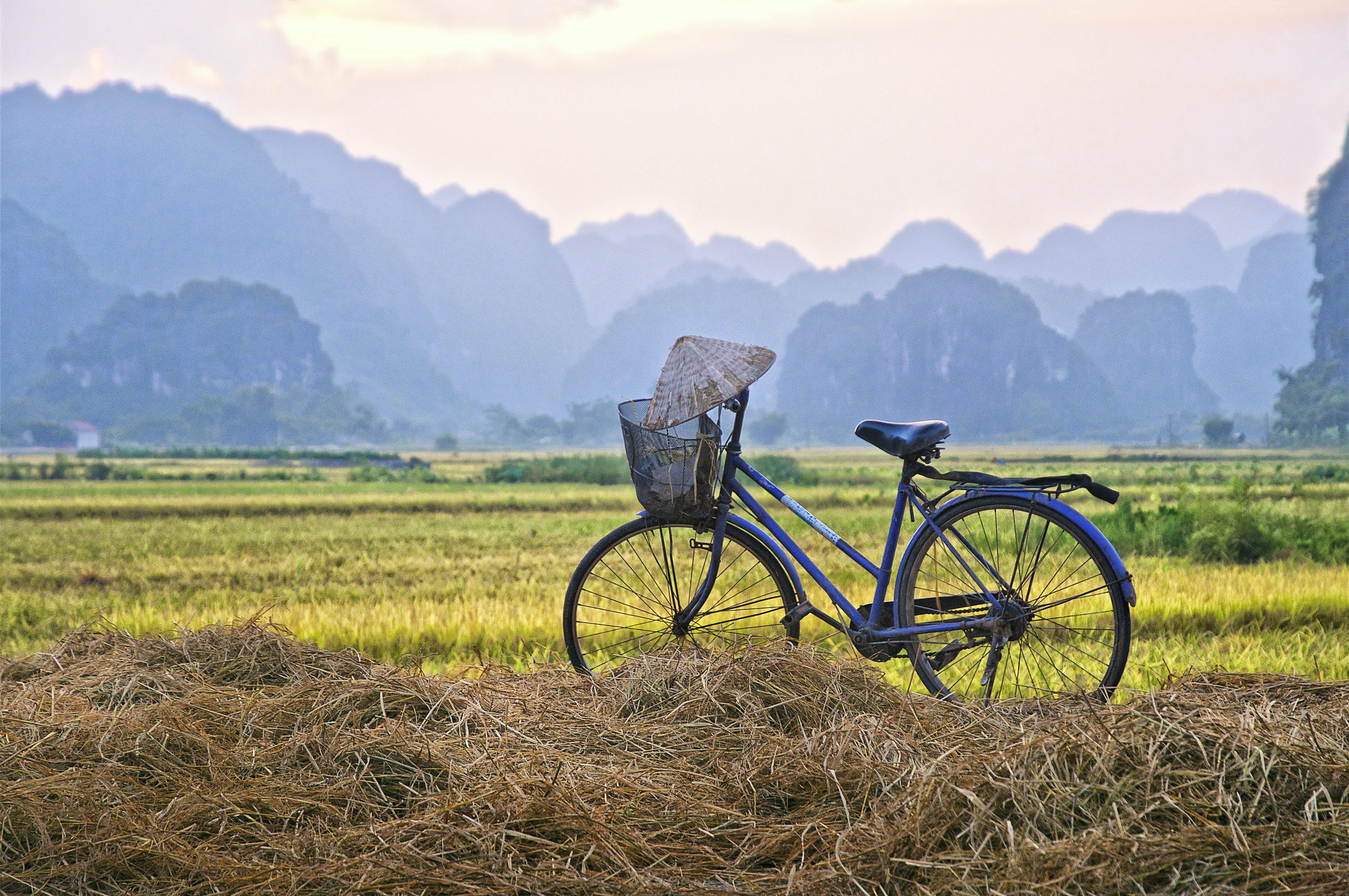 Free stock photo of bicycle, bike, rice field, sunset