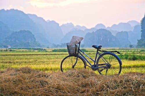 Free stock photo of bicycle, rice field, sunset, vietnam