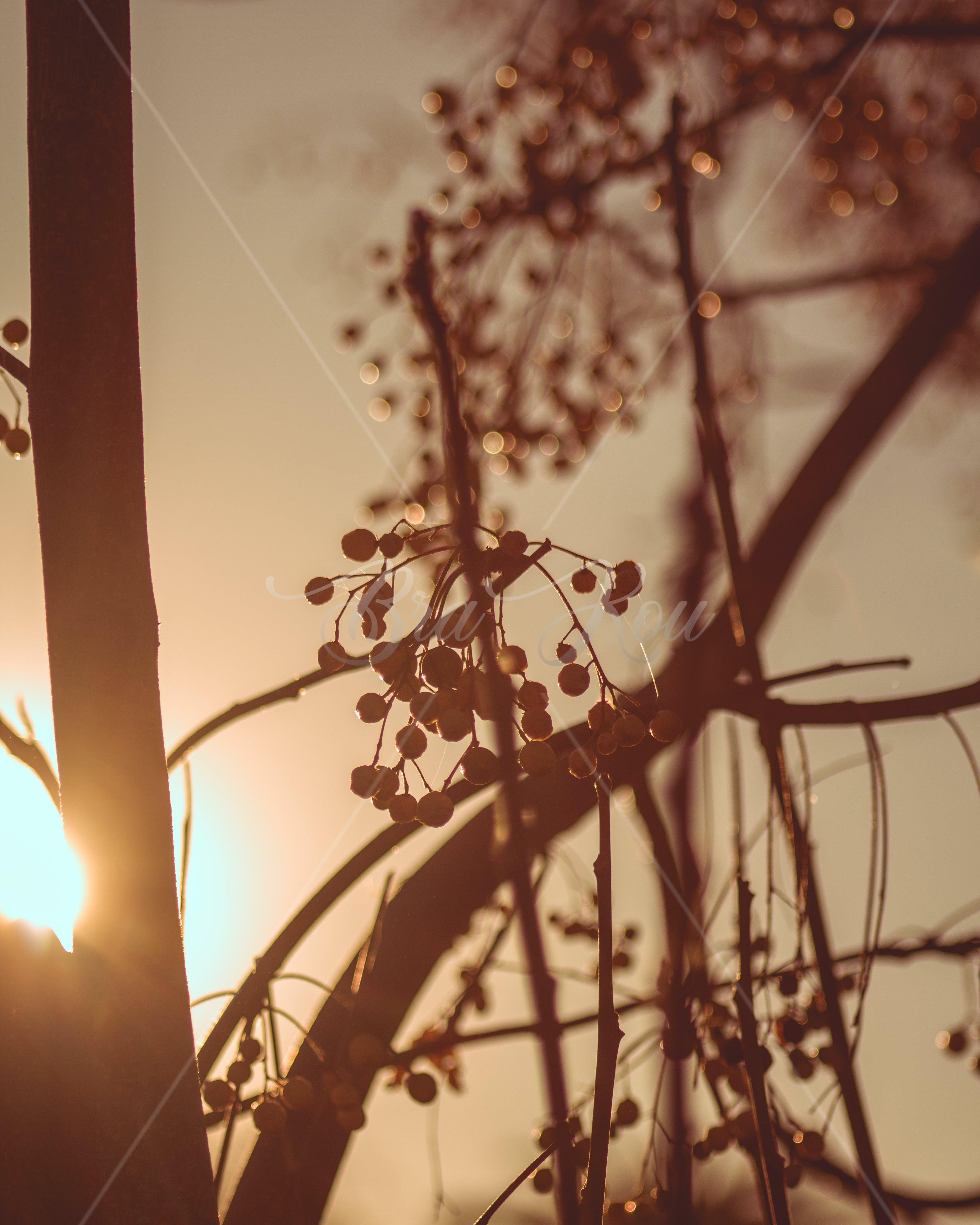 Imagine de stoc gratuită din #copac, #sun #tree #sky #knes # morocco