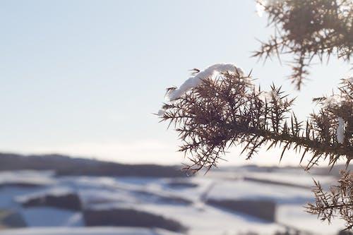 Foto d'estoc gratuïta de arbust, brillant, neu, sol
