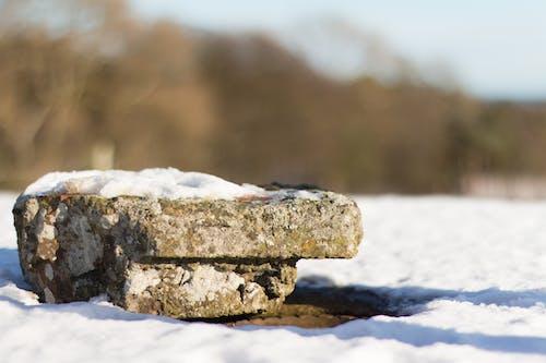 Foto d'estoc gratuïta de liquen, neu, pedra, pissarra