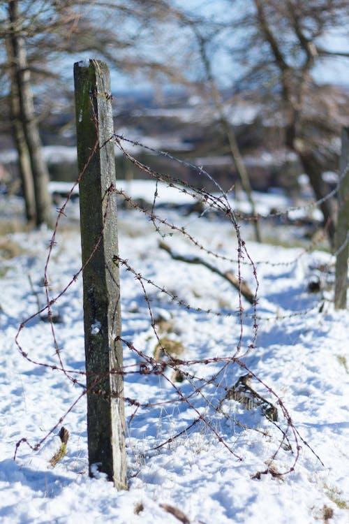 Foto d'estoc gratuïta de blau, correu, filferro espinós, neu