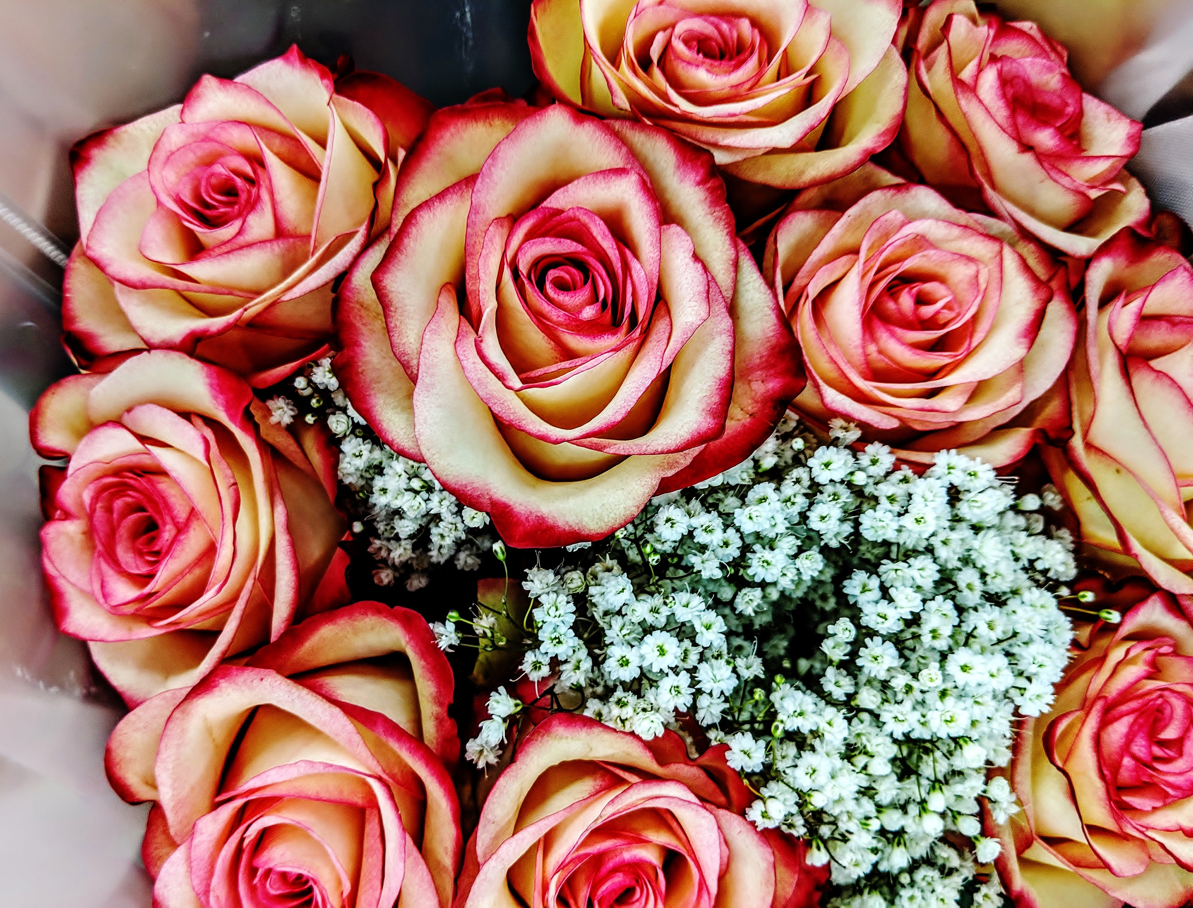 Free stock photo of fire and ice roses, pink roses, red roses, rose bouquet