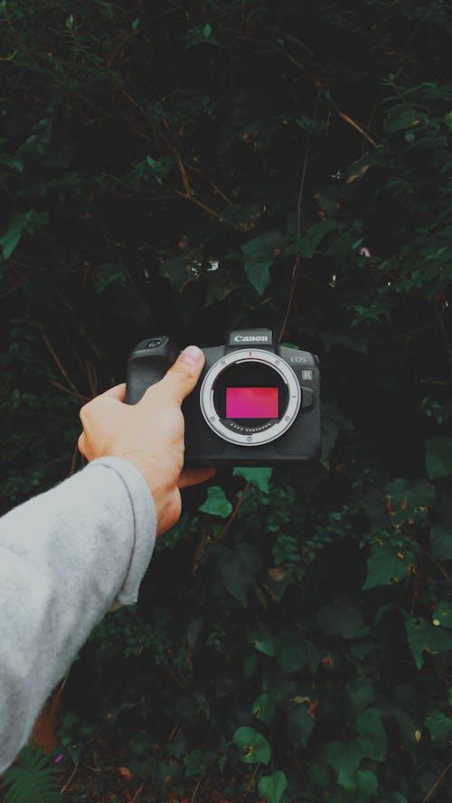 Fotos de stock gratuitas de cámara, Canon, mano