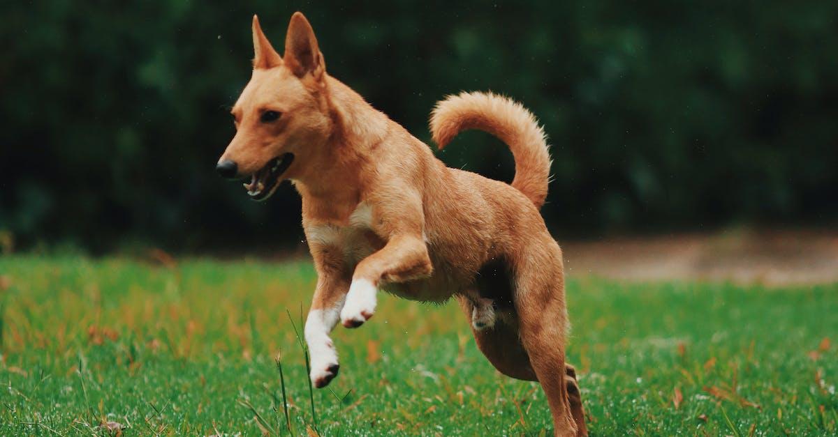Brown Dog Running on Grassy Field · Free Stock Photo