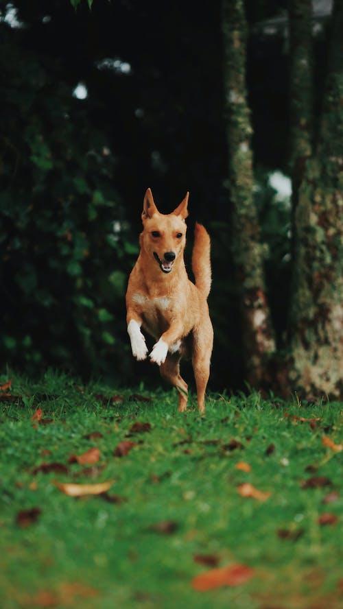 Brown Dog Running Near Tree