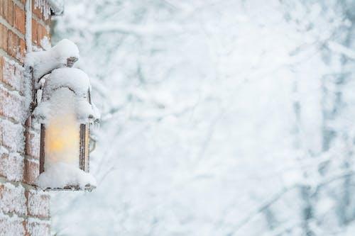 Ảnh lưu trữ miễn phí về lạnh, lý lịch, mùa đông, sương giá