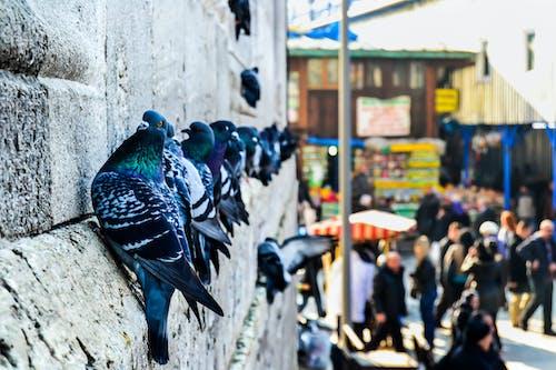 Free stock photo of #free #animals #color #birds #photo #photoofday