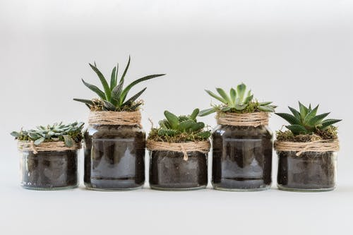 Photos gratuites de centrales, plante d'appartement, plantes en pot, plantes grasses