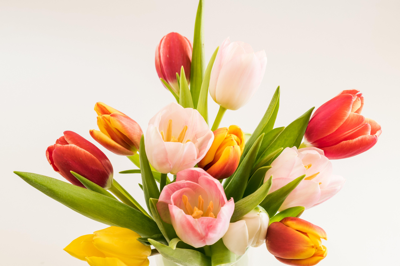 Free stock photo of flowers, spring flower, spring flowers, springtime