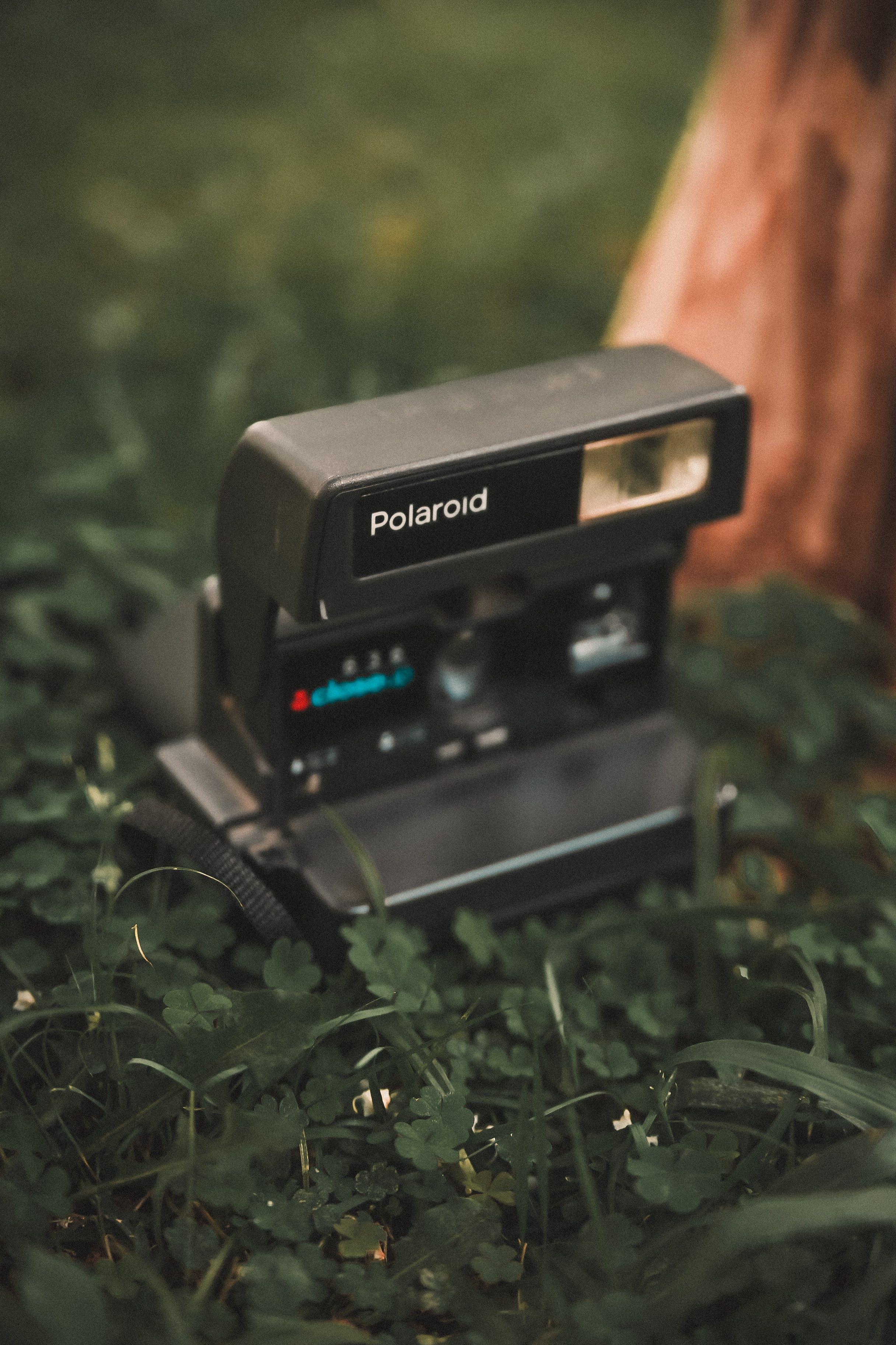 Gratis lagerfoto af græs, Instant-kamera, kamera, Polaroid