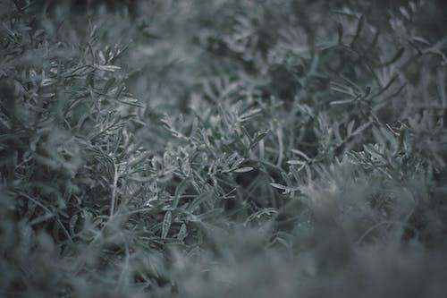Darmowe zdjęcie z galerii z głębia pola, kolor, monochromatyczny, trawa