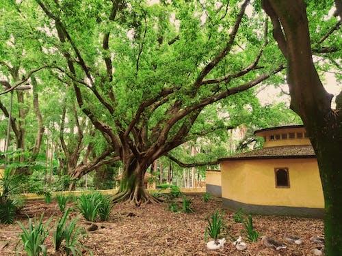 Foto d'estoc gratuïta de bellesa a la natura, jardí, jardí Botànic, jardí de flors