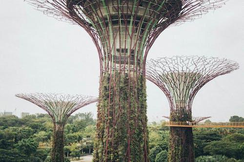 Kostenloses Stock Foto zu architektur, bäume, brücke, design