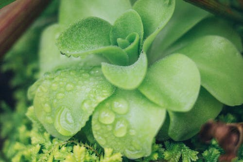 フローラ, ボタニカル, 多肉植物, 工場の無料の写真素材