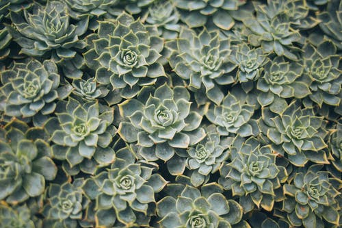 Aerial View Photography of Succulent Plants