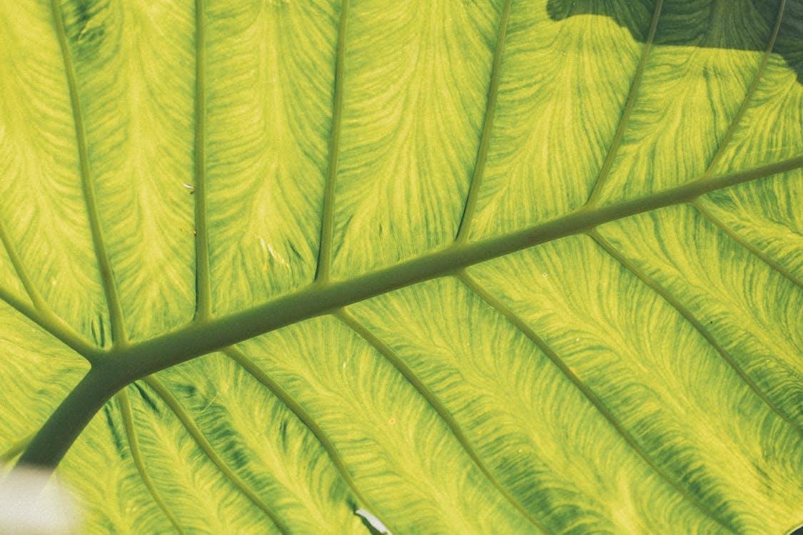 bujny, roślina, środowisko