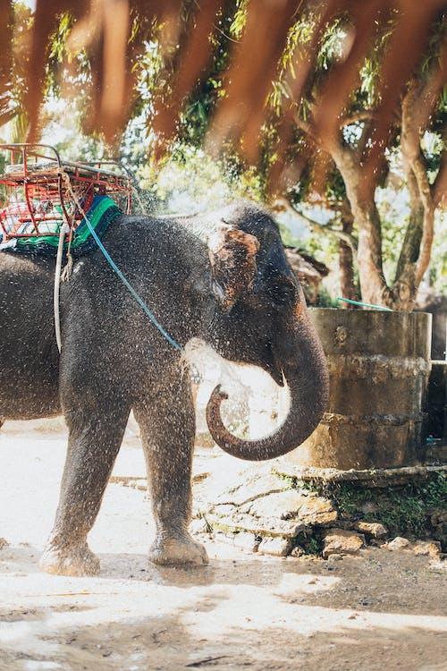 Elefanten Spritzendes Wasser
