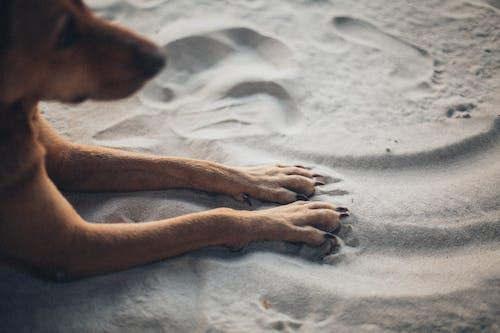 ペット, 動物, 可愛い, 犬の無料の写真素材