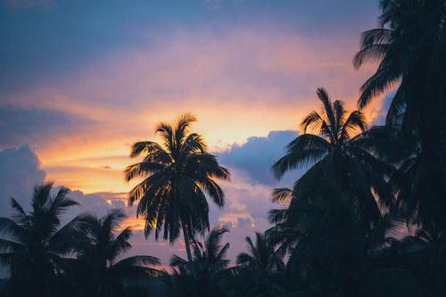 Kostenloses Stock Foto zu bäume, goldene stunde, kokosnussbäume, landschaftlich