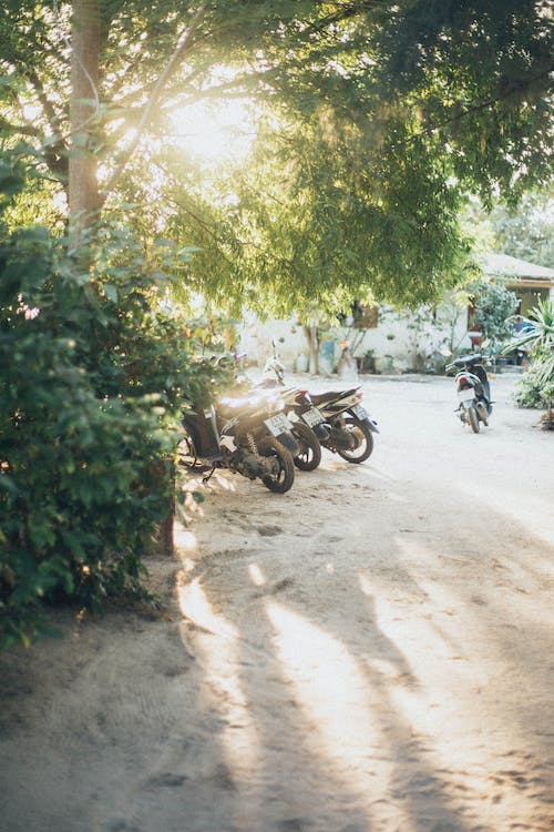 Parked Motorcycles Under Green Tree
