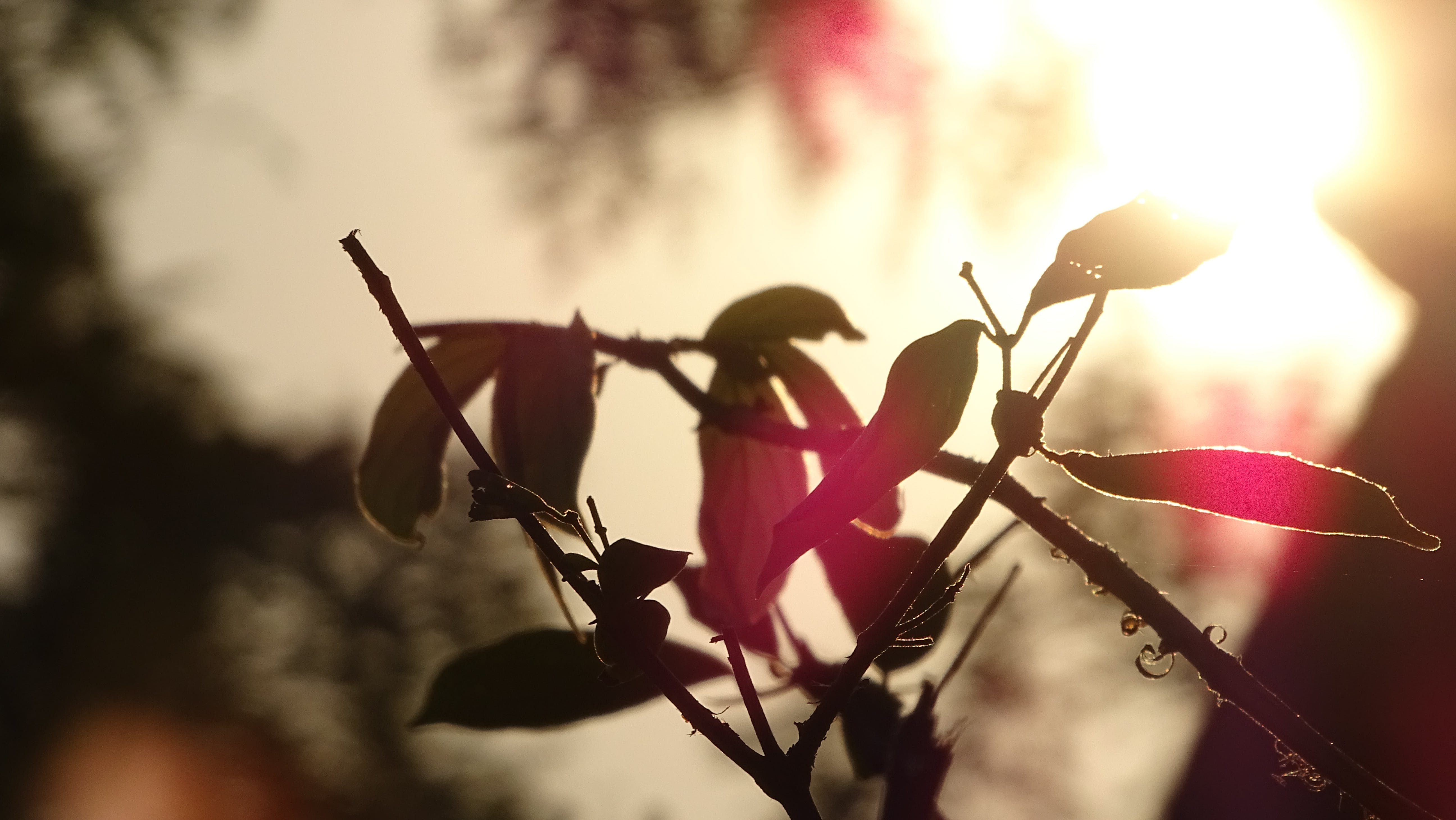Free stock photo of atmospheric evening, beautiful, beauty in nature, leaves