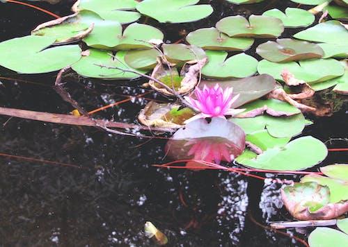 中國的天性, 公園, 在池塘里, 天性 的 免費圖庫相片