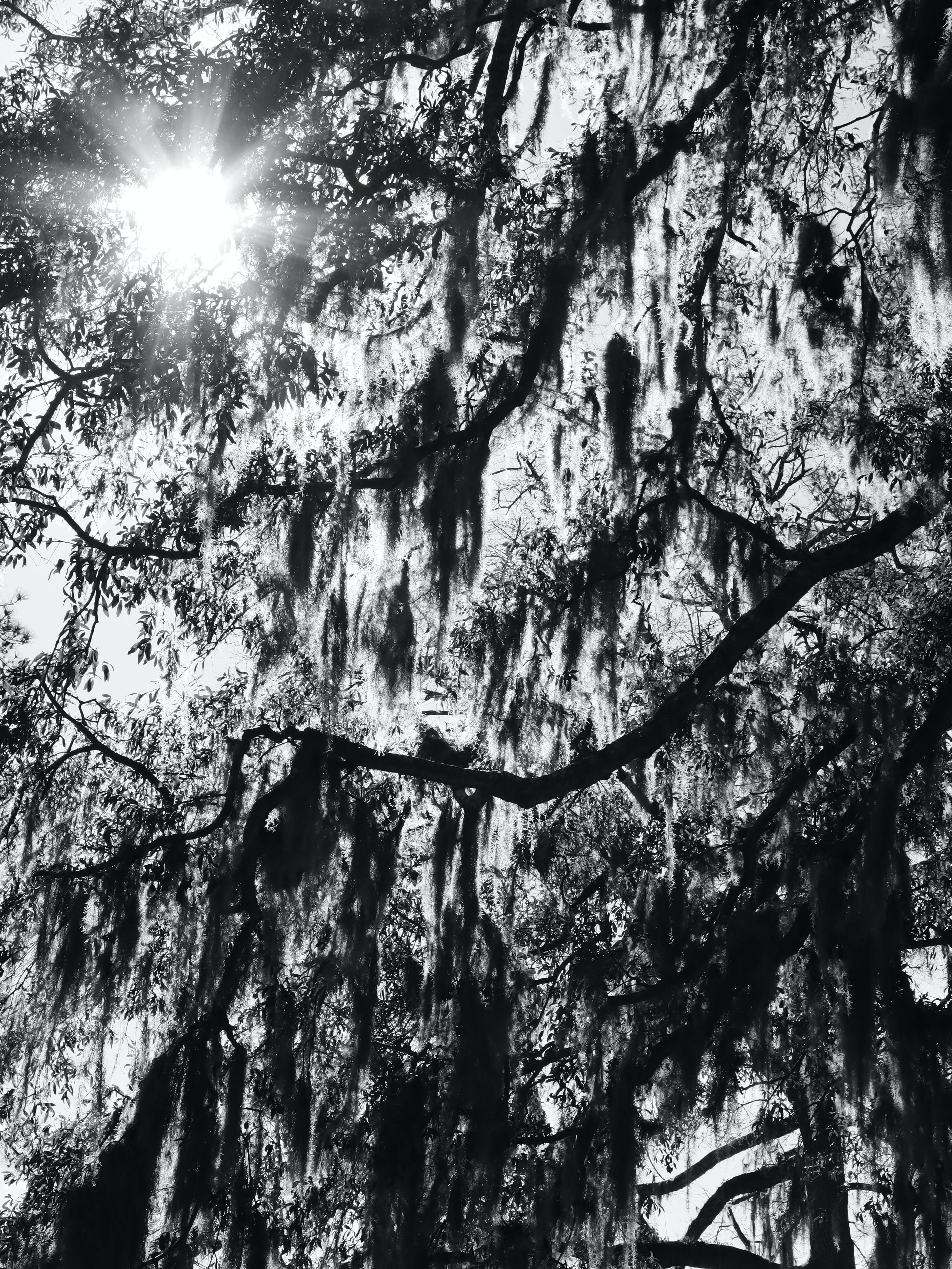 Free stock photo of black and white, bonaventure, cemetery, savannah