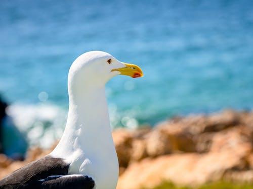Бесплатное стоковое фото с белый, берег, вода, глаз