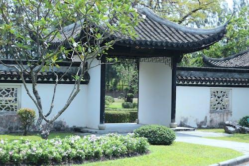 Gratis lagerfoto af kinesisk have