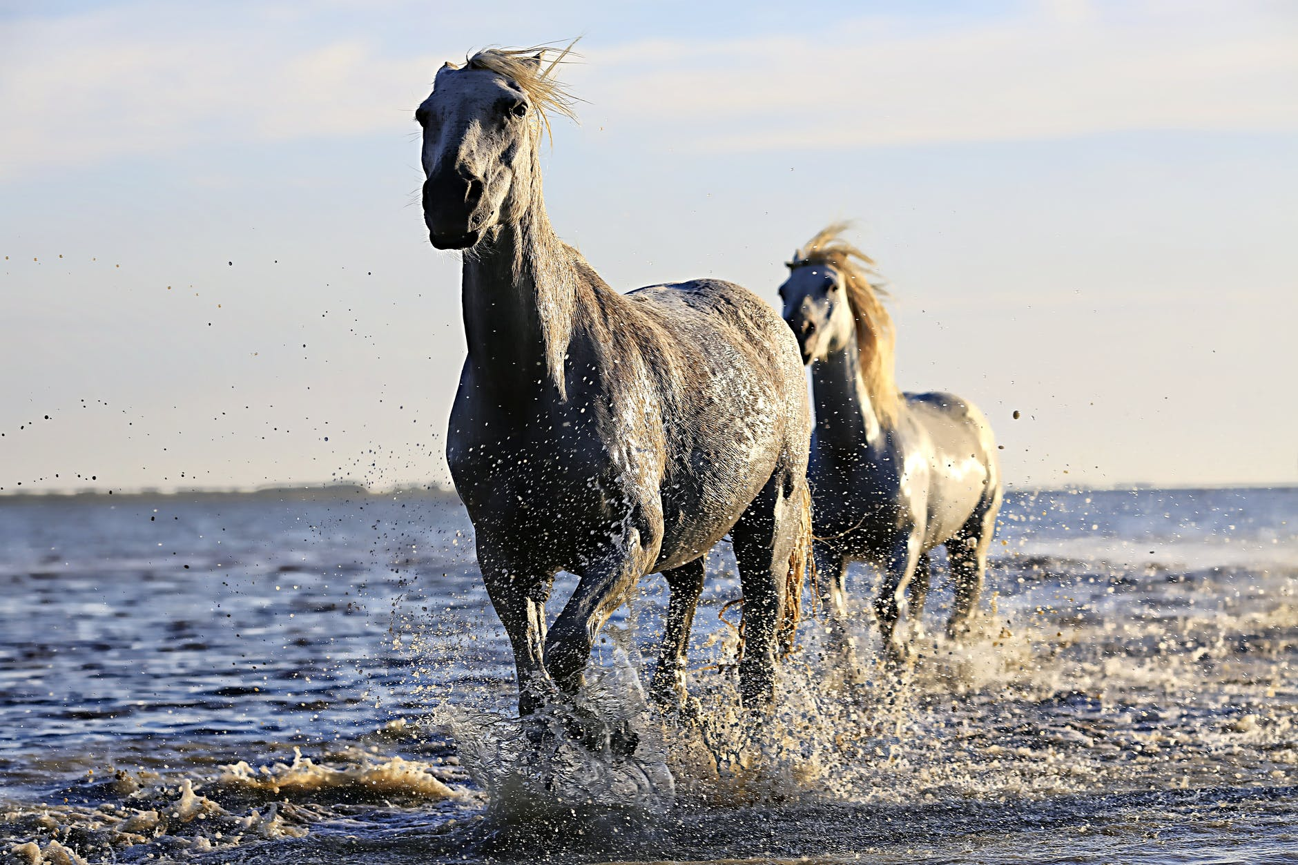 horse quotes 2-black-horse-running-on-body-of-water-under-sunny-sky