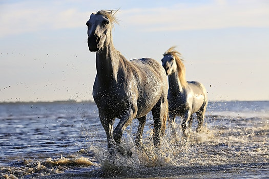 2 Black Horse Running on Body of Water Under Sunny Sky