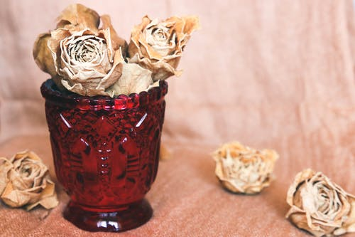 Free stock photo of dry roses, glass, roses, yellow roses